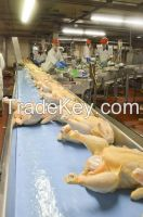 full product Quote For Halal Frozen Whole Chicken Grade A