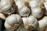 Fresh White Garlic for sale