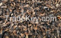 Palm Kernel Shell for sale