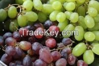 Fresh Grapes for sale