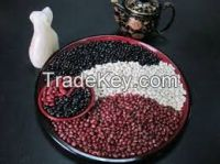 Red , White , Black , Brown Kidney Beans for sale