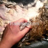 Rabbit Fur, Zebra Skin, Donkey Hides