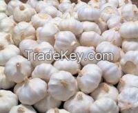 Fresh and Dried Garlics