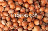 Quality Pitachio Kennels, Pistachio Nuts, Hazlenuts