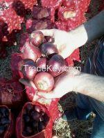 fresh onion (Red, yellow, golden , White )