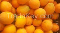 fresh orange (Navel Orange , Valencia Orange , Baladi Orange )