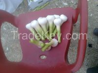 Shattering prices Egyptian fresh garlic and dried (( attn of importers or buyers))