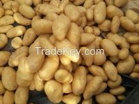 Shattering prices Egyptian fresh Potatoes All size with all certificates of health (( attn of importers or buyers))