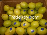 Shattering prices Egyptian fresh Lemon All size  (( attn of importers or buyers))