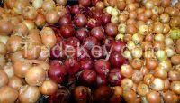 Fresh Onion, Red Onion, White Onion, Yellow Onion