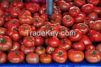 Quality Fresh Tomatoes