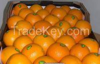 Fresh Citrus fruits, Apple, oranges, lemon, bananna, avocado, fresh vegetables