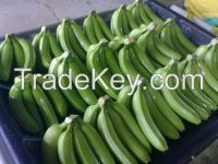 Fresh Class A Green Cavendish Bananas