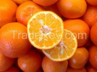 Fresh Valencia And Naval Oranges