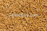 High Quality Durum Wheat