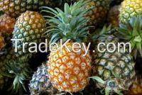 Best Quality Fresh Pineapples