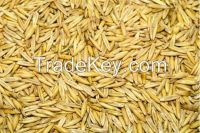 High quality Oats for sale