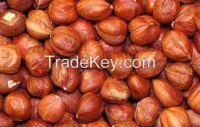 Quality Hazelnut