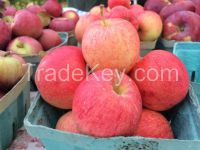 Fresh Royal Gala Apples, Fuji Apples, Golden Delicious Apples, Red Delicious .