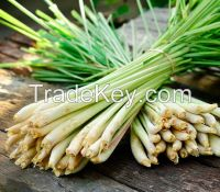 High quality LEMONGRASS