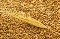 Wheat, Buckwheat, Barley, Pearl Barley, Millet,
