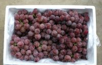 New Crop Fresh Seedless Grape Red Globe Grapes
