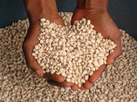 Top Quality Cow Peas