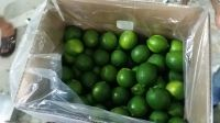 Fresh Seedless Limes