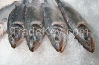 Frozen Mackerel Fish(Jack/Horse/Pacific/Atlantic )