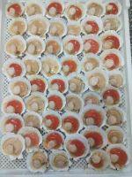 Half-shell Sea Scallops with Roe
