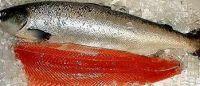 Frozen or Fresh Salmon