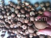 Dried Betel Nuts Whole & Split