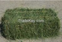 Alfalfal Hay / Lucerne Bales