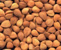 Apricot Kernels
