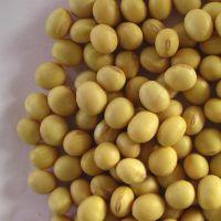 NON GMO Dried Soybean