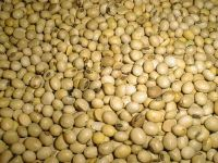 Sell Soybeans