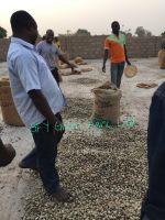 Sell High Quality Raw Cashew Nuts (RCN)