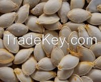 Winter Squash seeds