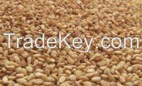 Ethopian origine Sesame Seed