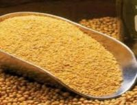 SoyBean Meal / GMO (ANIMAL FEED) FOR SALE