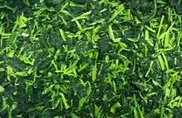 fresh spinach/frozen spinach/green spinach