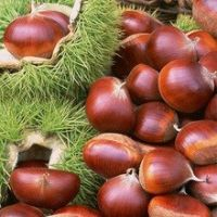 Quality Chest Nuts, Macadamia and other kinds of nuts