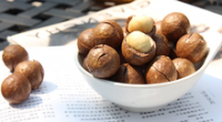 Raw macadamia nut in shell
