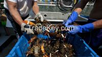 live, frozen and dried shrimps, crabs and lobsters