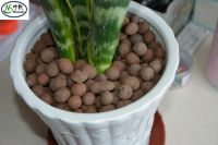 Lightweight Expanded Clay /clay pebbles as growing medium for Hydroponics