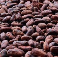 Sun Dried Cocoa Beans available