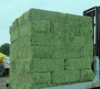 Best price Timothy Hay / Alfalfa Hay for sale