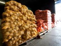 EXPORT HIGH QUALITY FRESH POTATOES