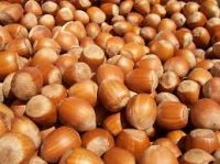 hazelnuts for sale