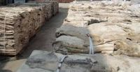 Wet and dry salted donkey hides for export
